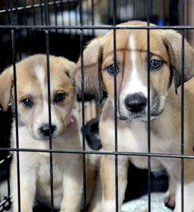 ASPCA Returns to Joplin to Host Low-Cost Spay/Neuter & Vaccine Clinic