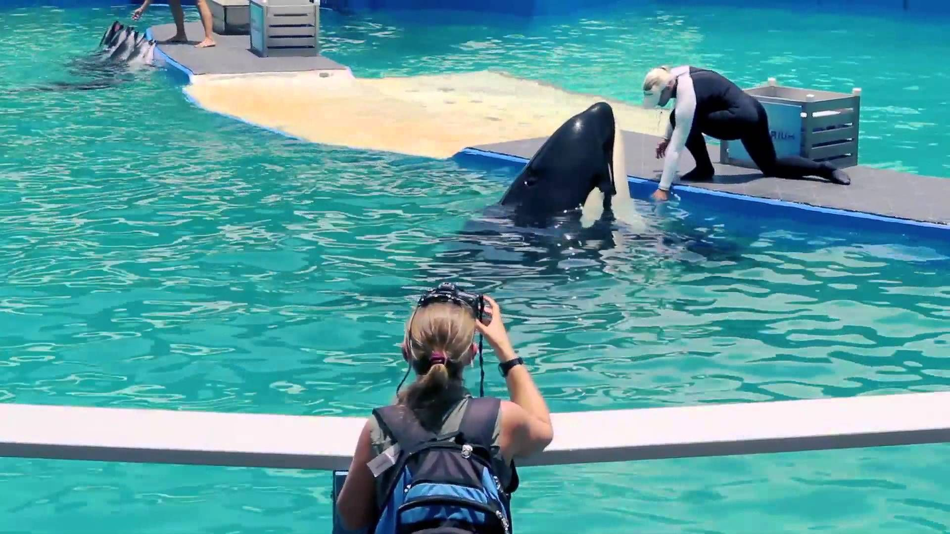 A Day in the Life of Lolita, the Performing Orca repin if you wont be buying a ticket again