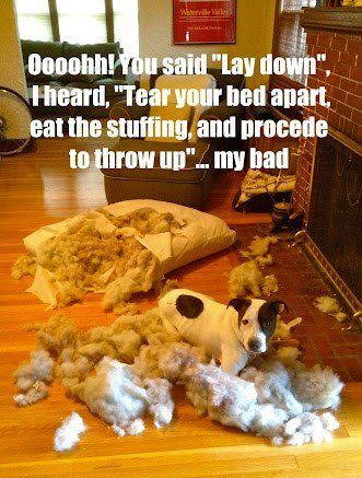 """Oooohh! You said """"lay down"""", I heard, """"Tear your bed apart, eat the stuffing, and proceed to throw up""""….my bad."""