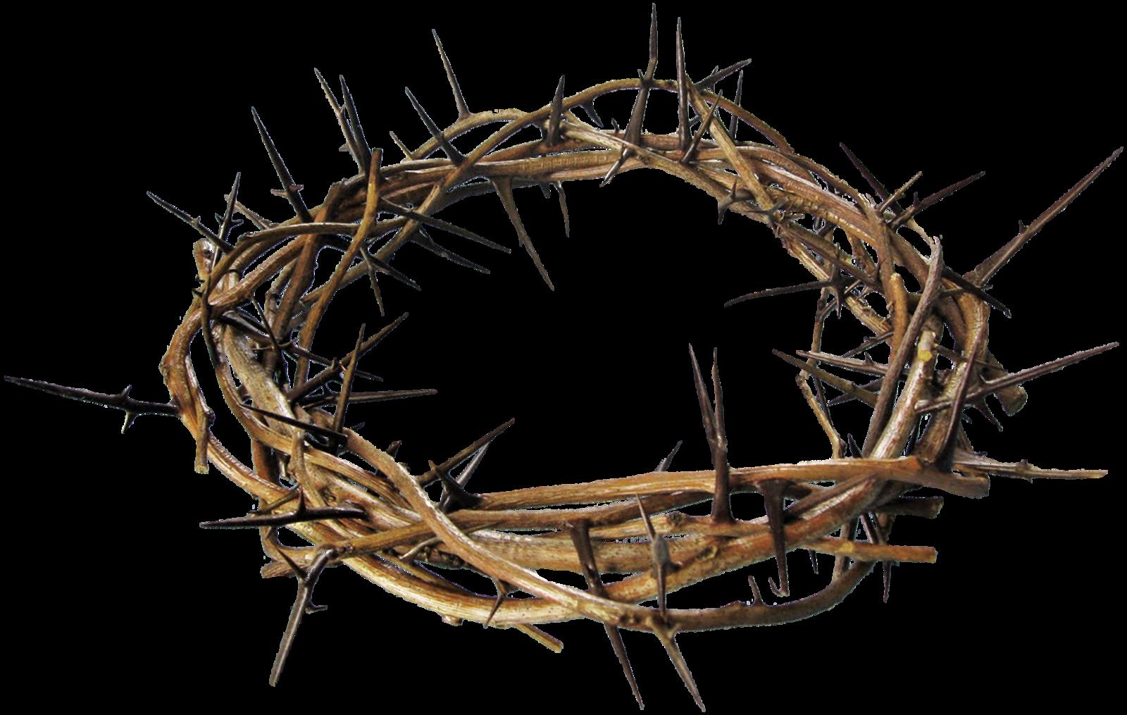полянки излюбленных терновый венец христа картинка сложных предметов присутствует