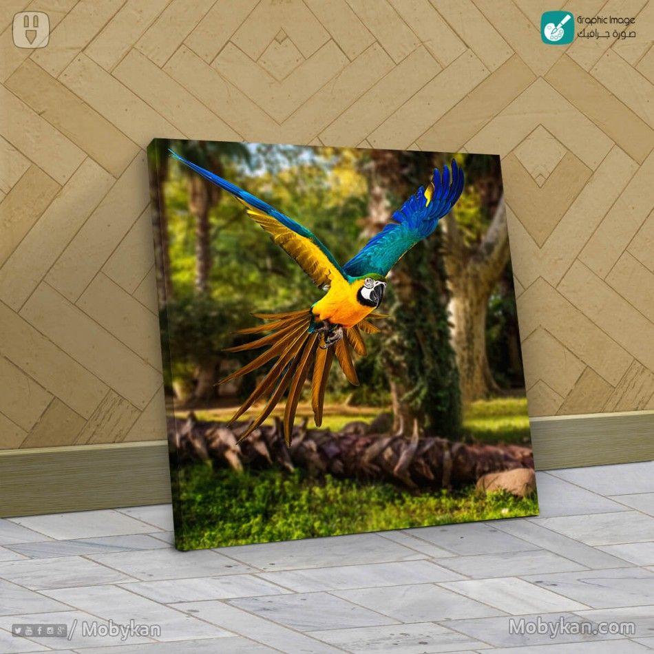 طائر البغباء الملون Animals Bird Parrot
