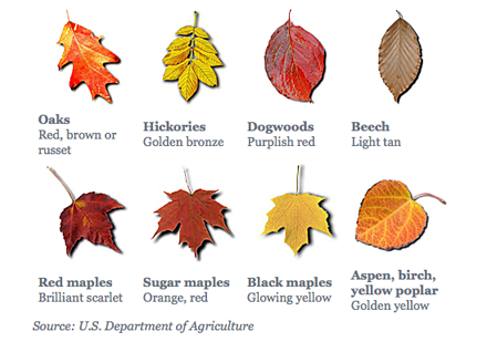 Leaf Color Chart Leaf Coloring Autumn Leaf Color Tree Identification