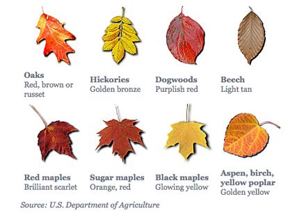 Leaf Color Chart Autumn Leaf Color Leaf Coloring Tree Identification