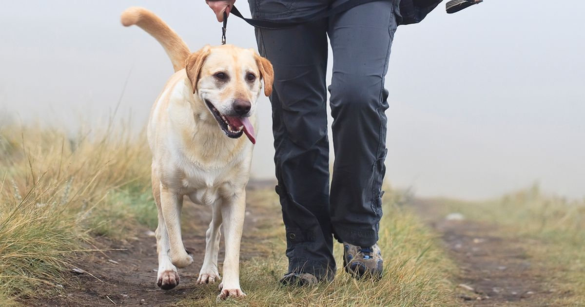 Dog Owners Warned To Keep Pets Away From Mud As Deadly Alabama Rot