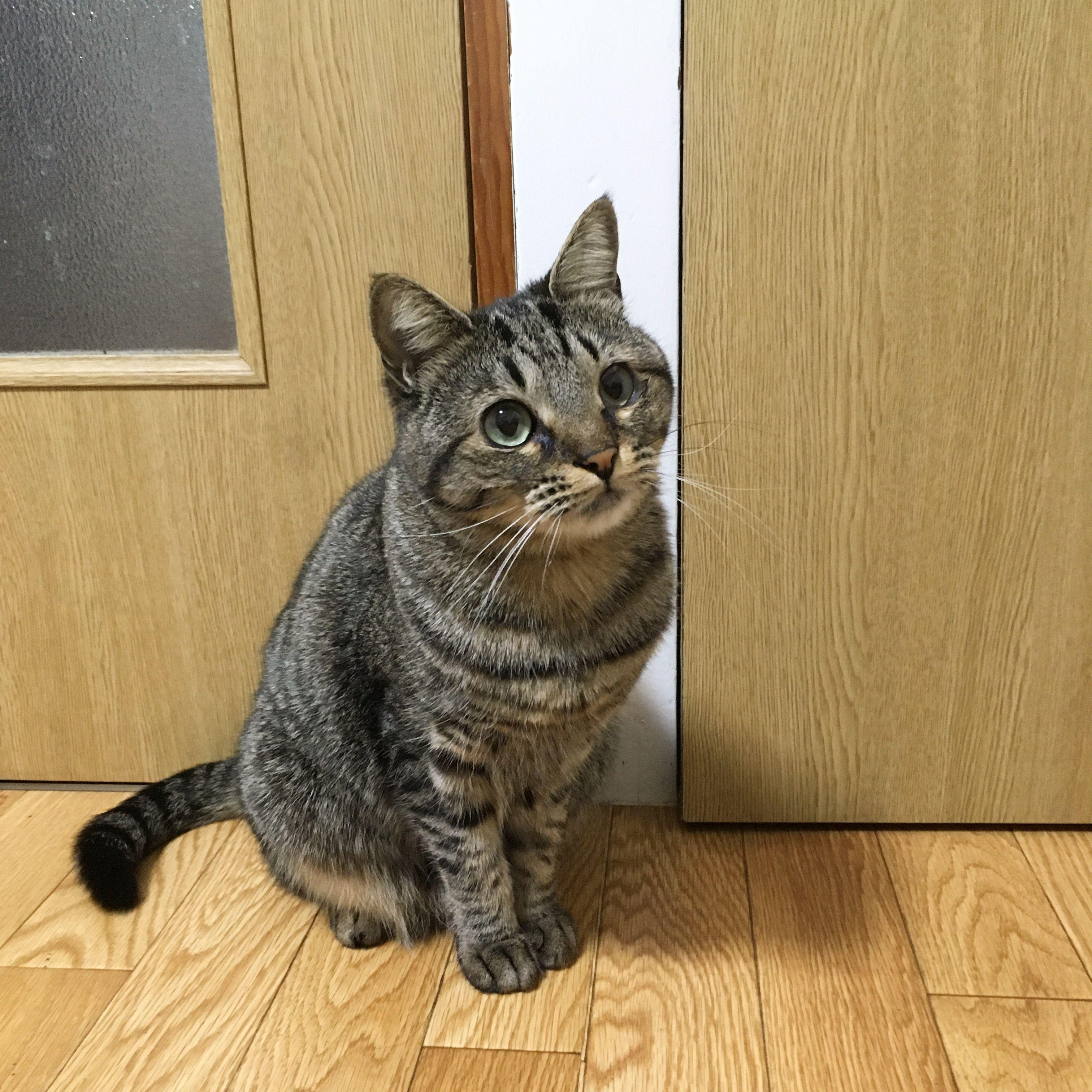 猫は飼い主に似る 猫 動物 子猫