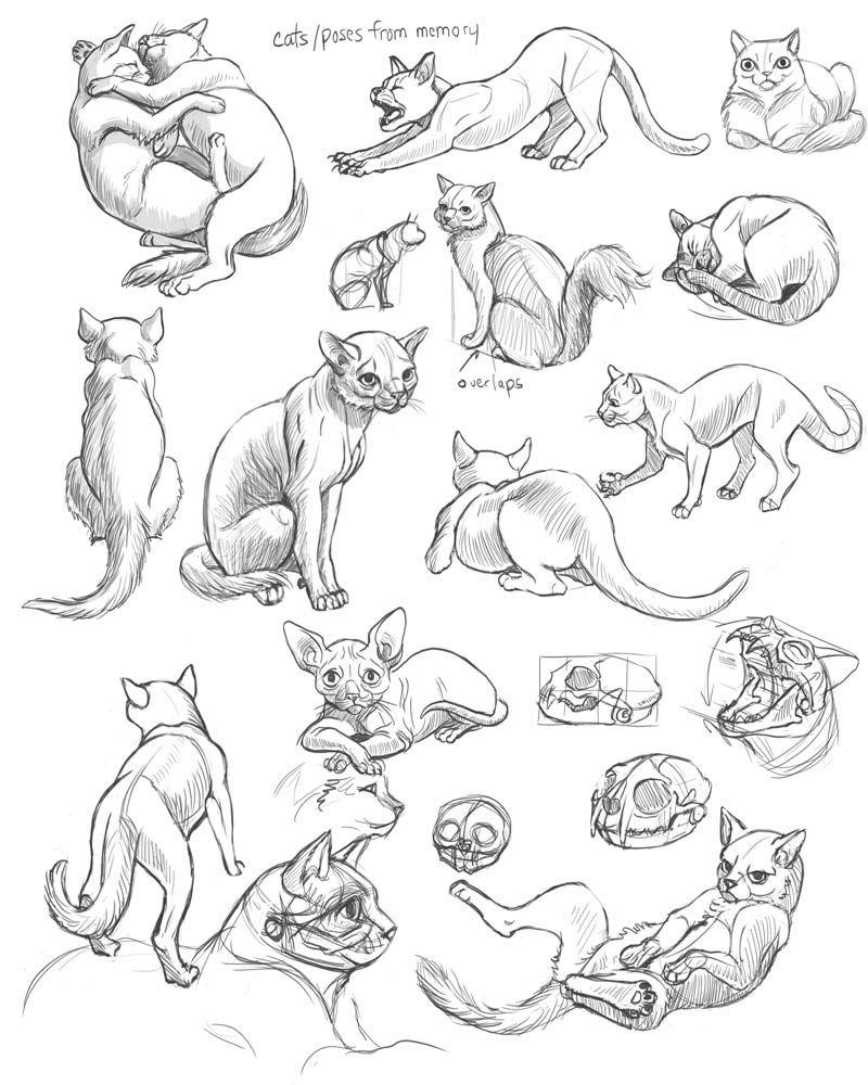 Schoolism Gesture Drawing Week 5 Cat Drawing Tutorial Cat