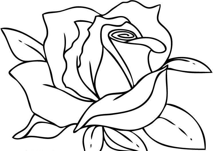 Genial I Have Download The Roses Are Beautiful Coloring Page