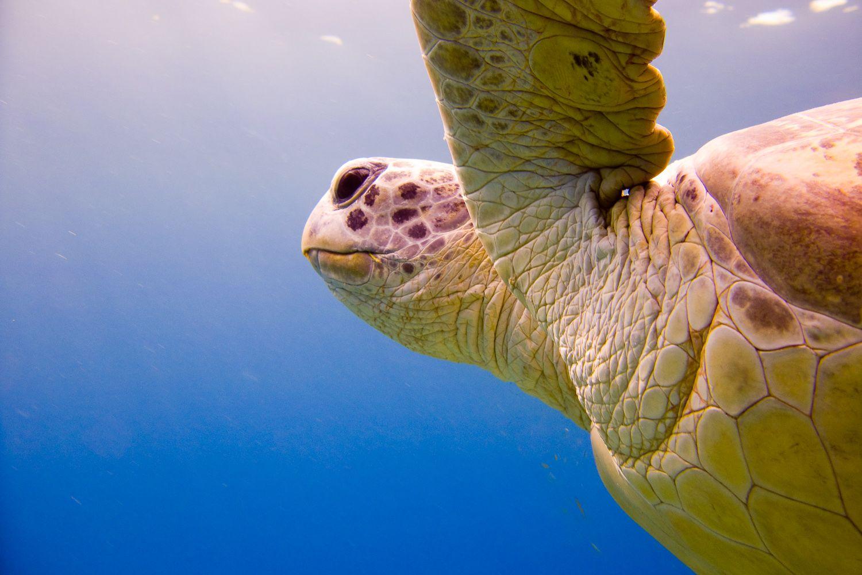14 tips voor onderwaterfotografie (Vink Academy   Fotografielessen van Laura)