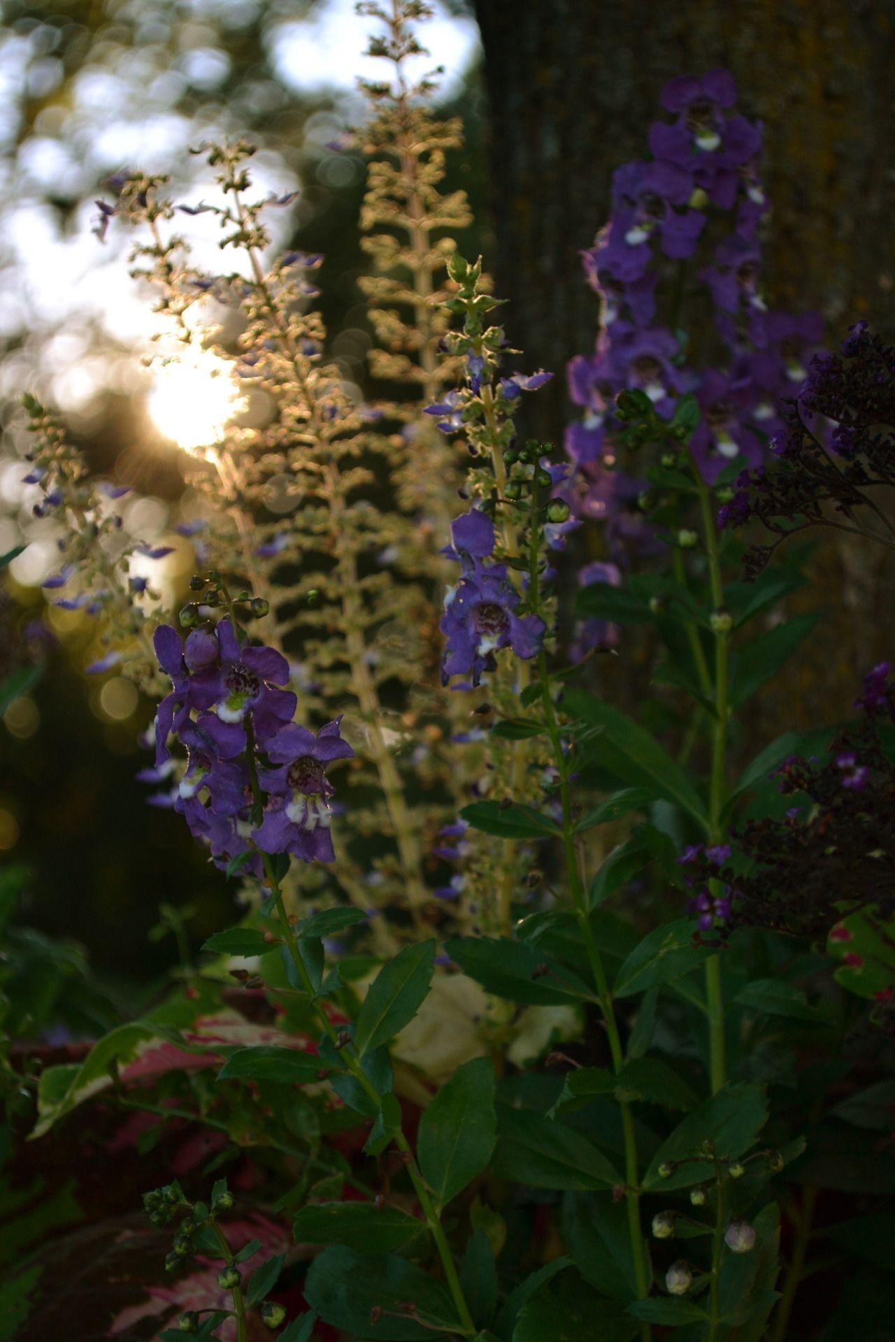 Tumblr - Garden