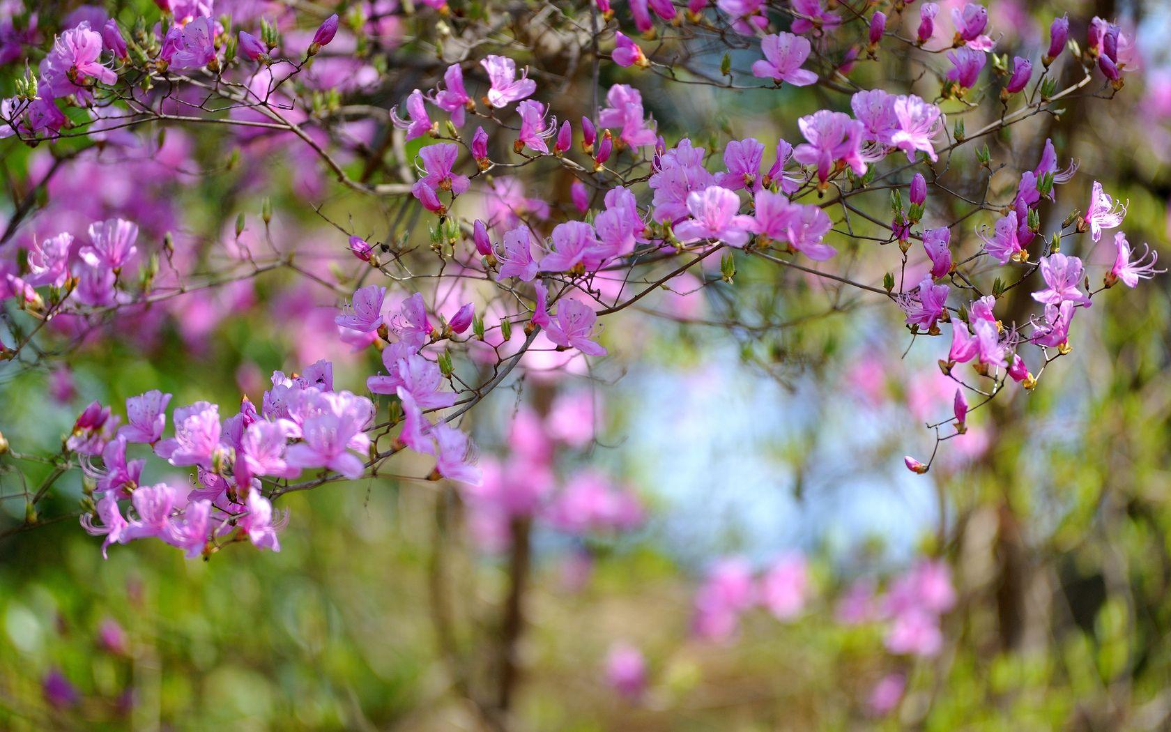 Обои цветы, широкоформатные. Природа foto 18