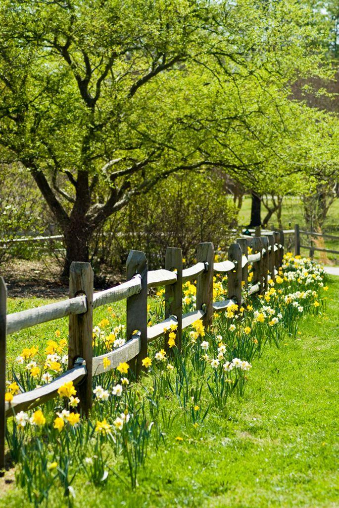 Photo of Narzissen – und der Frühling beginnt – Gartenzauber