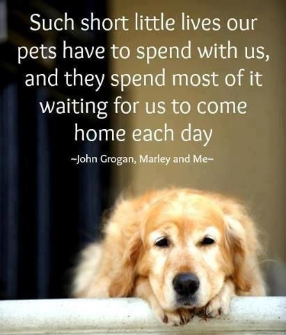 For Animals: