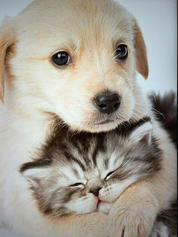 Two Babies Cute Cats And Dogs Cute Animals Cute Baby Animals