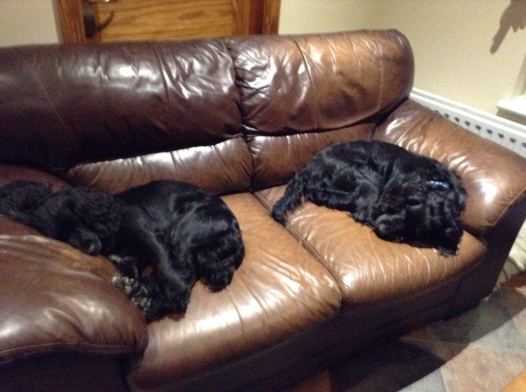 Two sleepyheads!!!