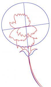 how to draw a carnation flower step 2