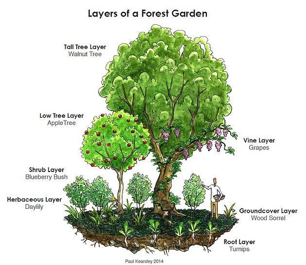 Wild Berries Edible Woodland Management