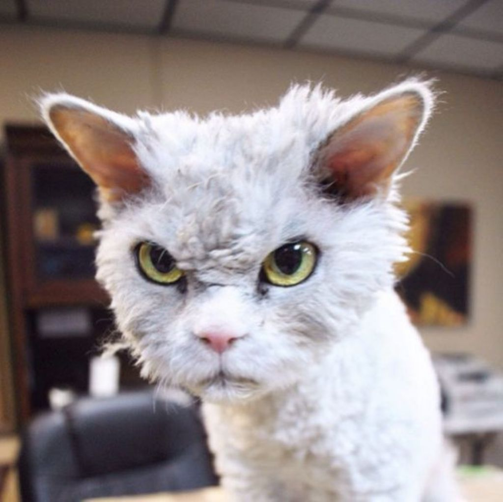 This is Albert He is one unfriendly looking cat You probably don