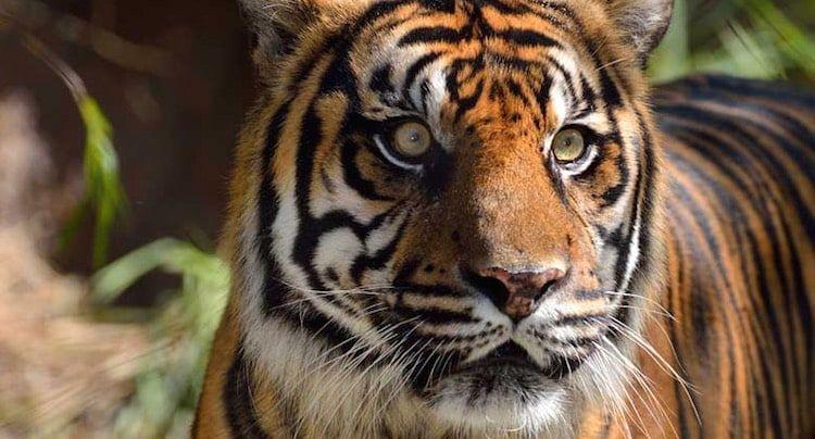 Zoo Heidelberg Gutschein 2 Fur 1 Coupon Code Ticket Mit Rabatt Zoo Freizeitpark Tierpark