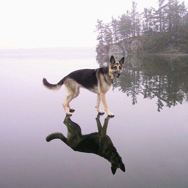 Icy Imgur Imagenes Divertidas De Animales Animales Bonitos Animales