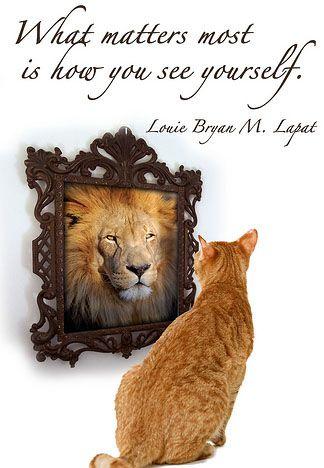 cat lion mirror