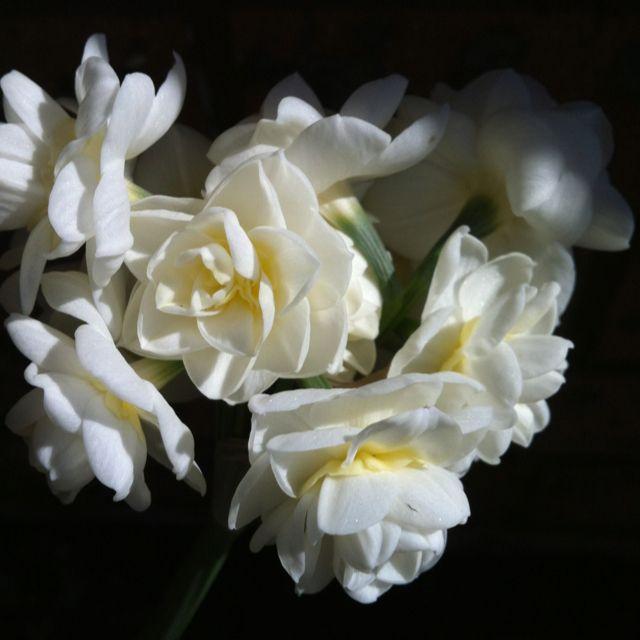 Flowers, Flower Images, Flower Power
