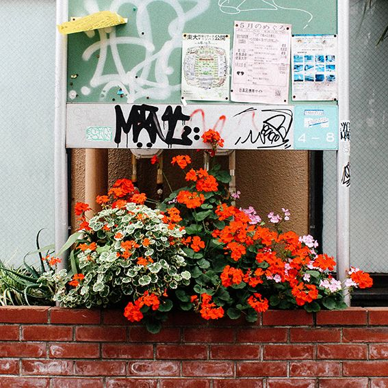 pretty geraniums, enhancing the mundane.
