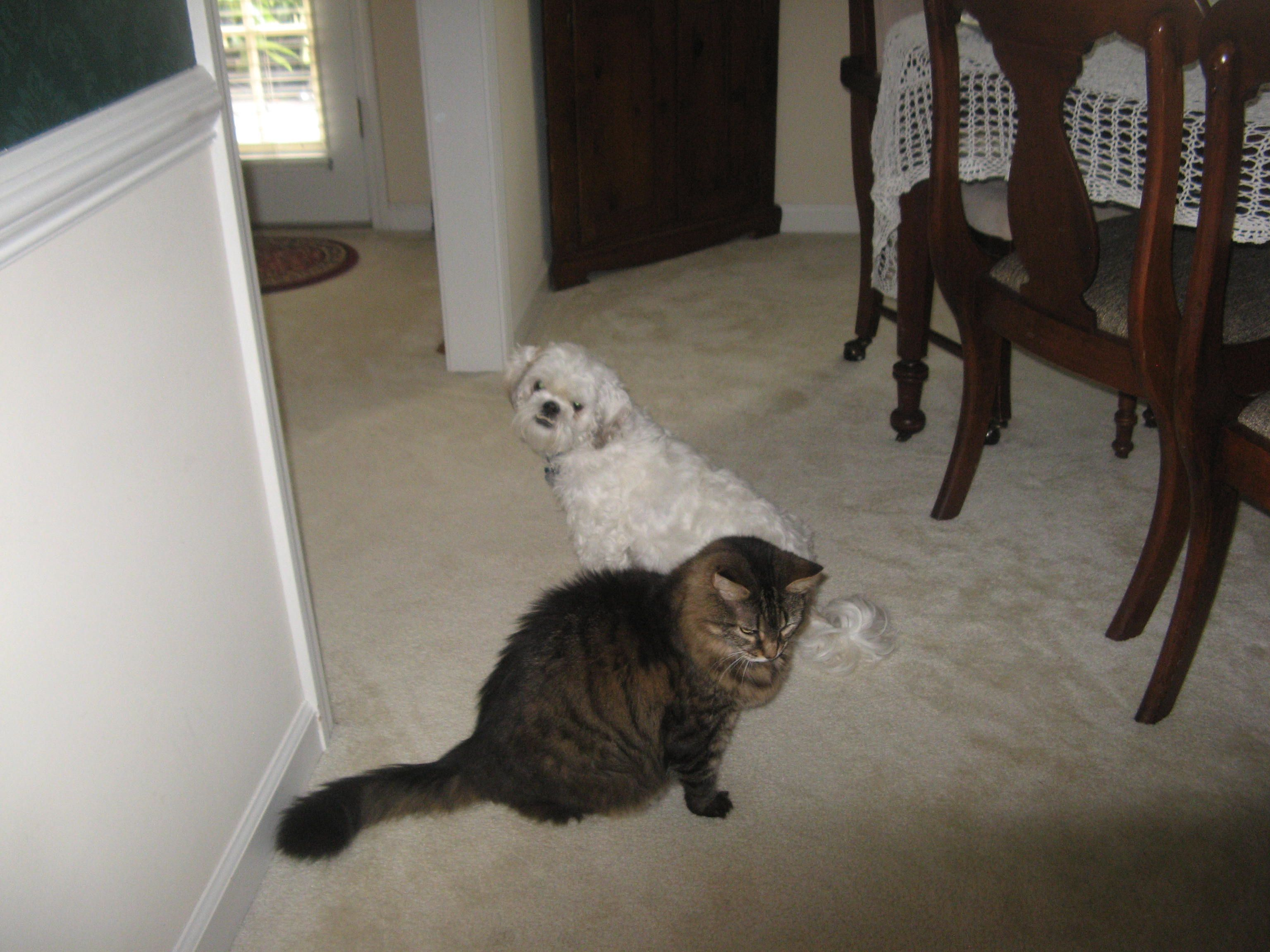 Dog Gets His Cat Brother For Picture