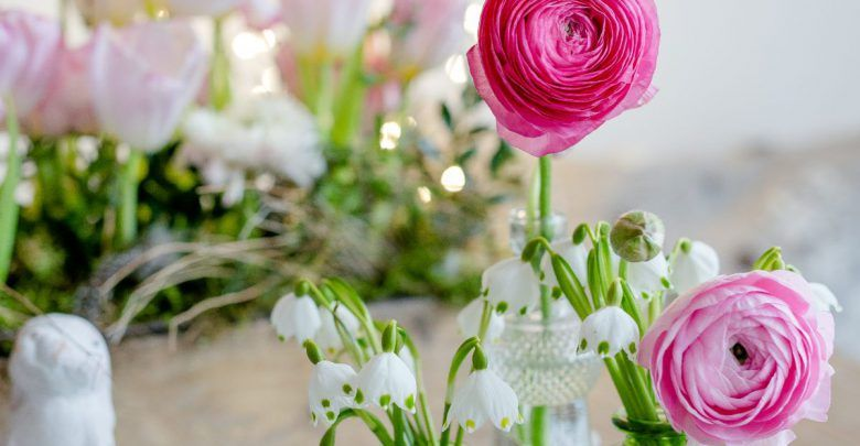 صور ورد أجمل وردة طبيعية في العالم