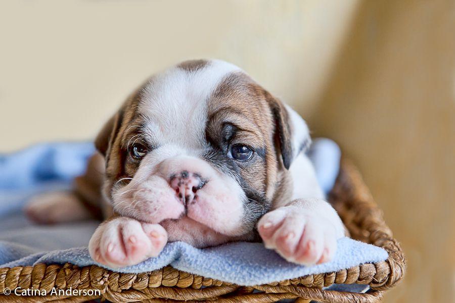A Different Kind Of Newborn Newborn Puppies Pet Photographer