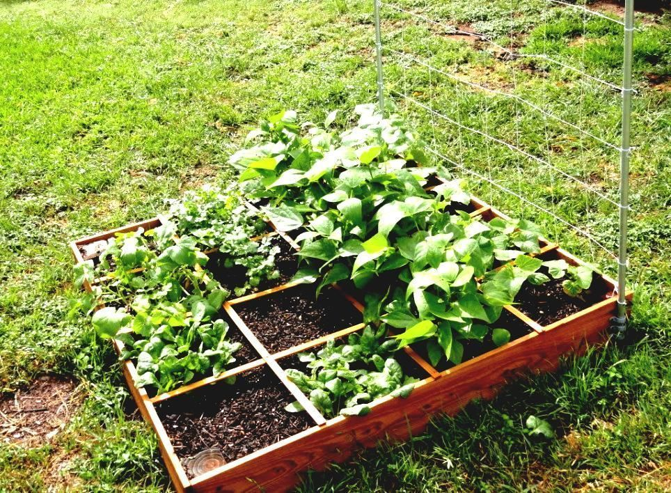 Vegetable Garden Layout For Beginners Garden And Patio Small Square Foot Backyard Small Vegetable Gardens Vegetable Garden Planner Backyard Vegetable Gardens