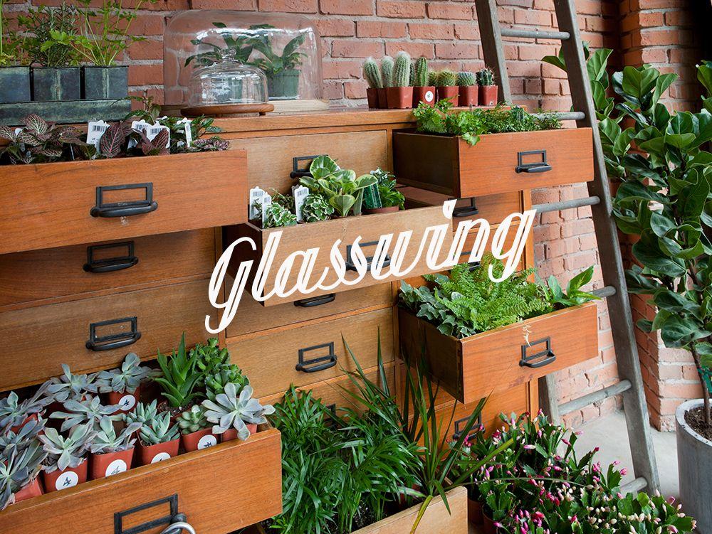 Glasswing — Seattle Shopping Glasswing, Seattle shopping