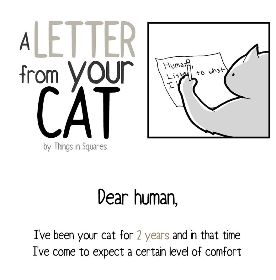 Your Cat Has Written You A Letter And You Must Read It Cat