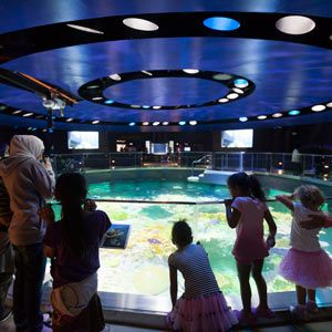 Top 10 best aquariums in the US | Fun facts