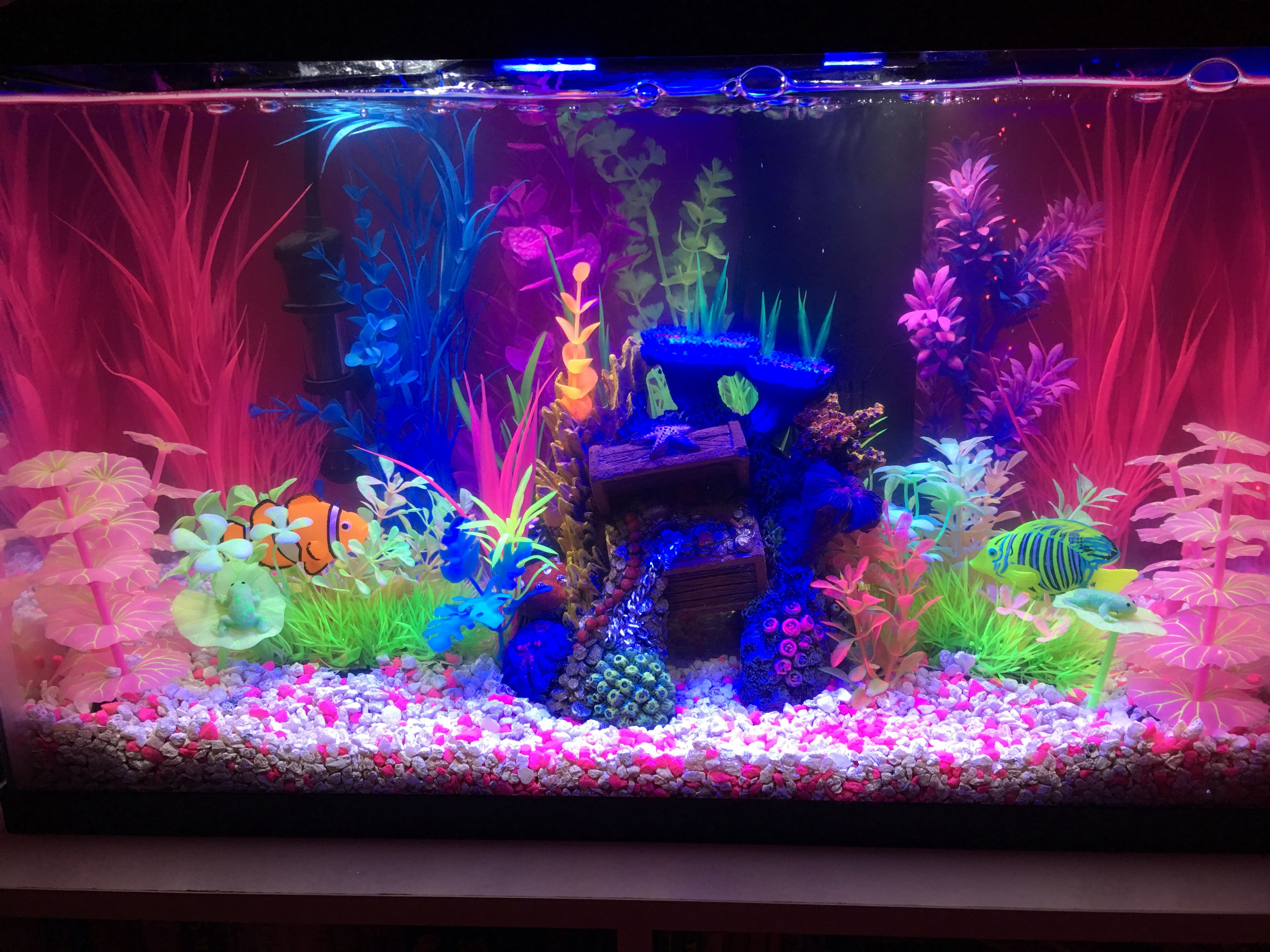 Planted glofish tank  Glofish tank, Fish tank decorations, Fish
