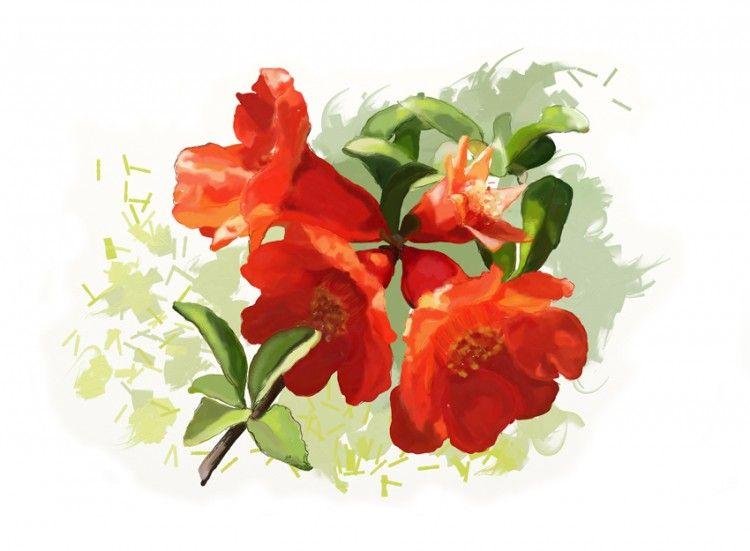 Acuarela de la flor del granado.  Aumenta la intuición y armoniza la creativida...
