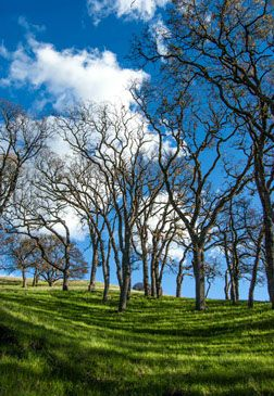 This is a picture I took while walking at Del Valle State Park in Livermore, CA. I most perfect day.