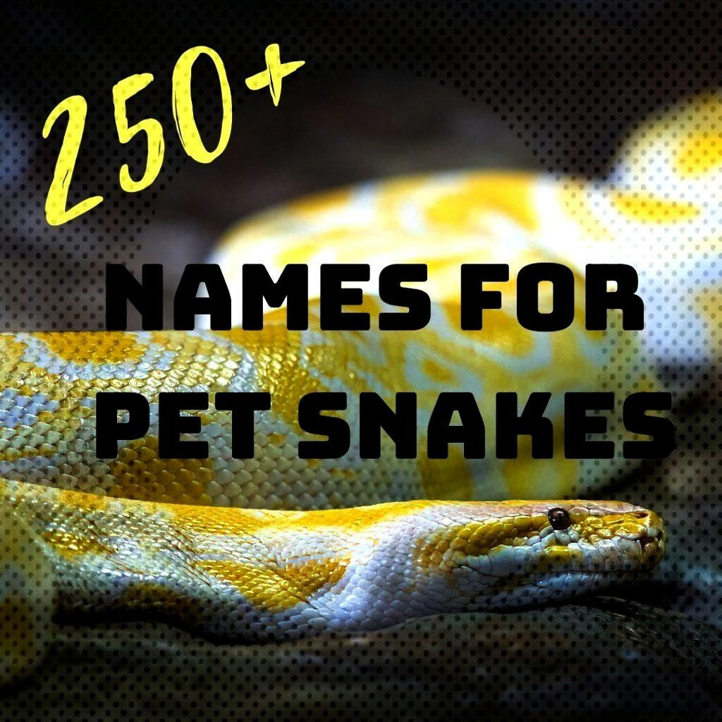 you love snakes Are you looking for the perfect name for your new companion Choose from funny Do you love snakes Are you looking for the perfect name for your new compani...