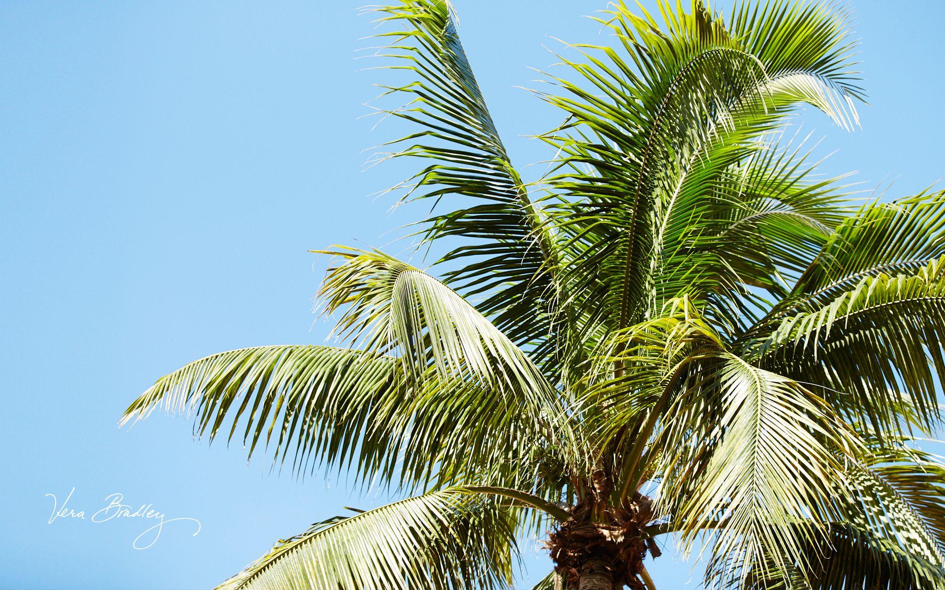 Vera Bradley Palm Tree Desktop Wallpaper | Downloadable Desktops ...