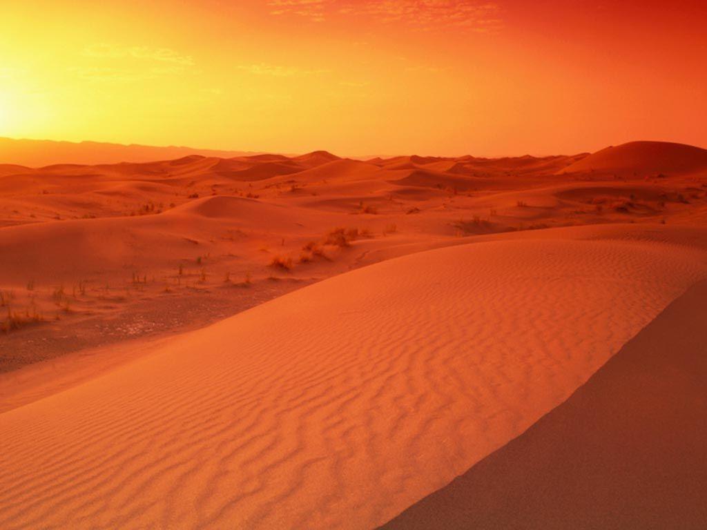 Pin On Desert Beauty