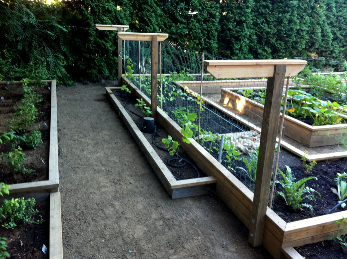 raised beds on different levels and building a grape