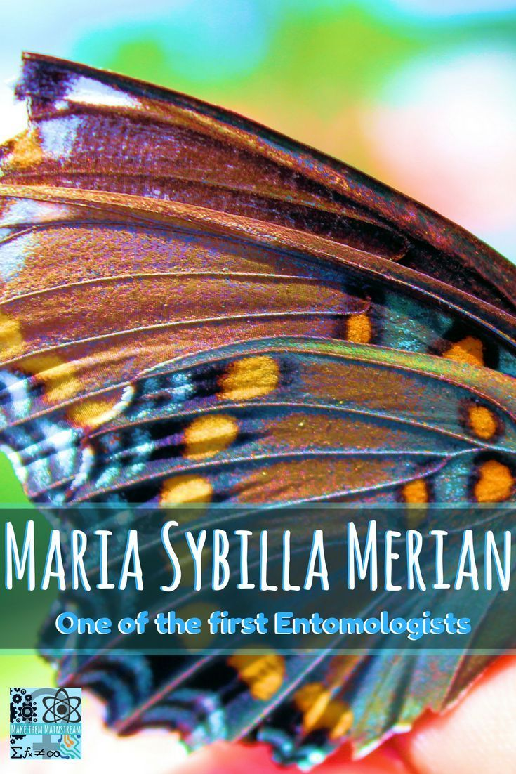 Maria Sibylla Merian One of the First Entomologists