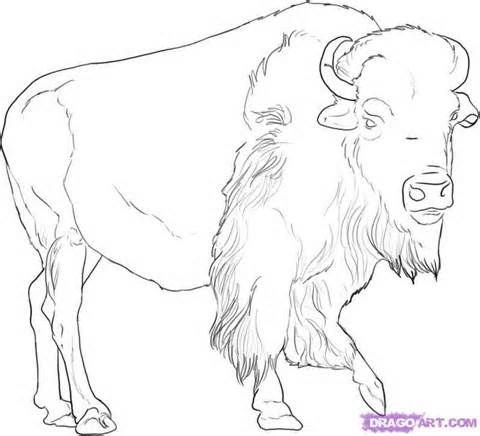 Buffalo Drawings Illustrations Yahoo Image Search Results