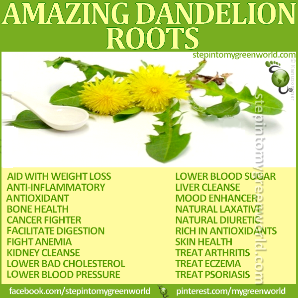 Dandelion extract weight loss