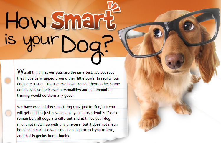How Smart Is Your Dog Dog Quiz Pets Smart Dog