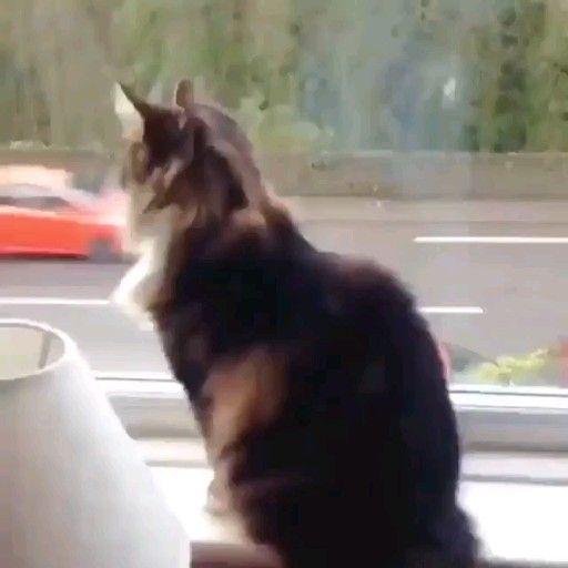😀 #catogram #кот #кошка #кошки  #животные #мимими #animal #animals #animallovers #pet #pets #catstagram #catlover #cat
