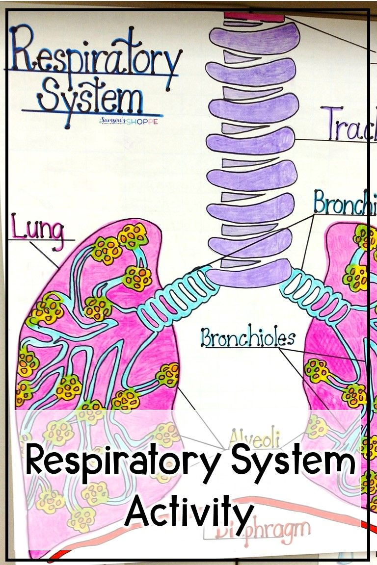 Respiratory System Activity Respiratory System Activities Respiratory System Body Systems Worksheets