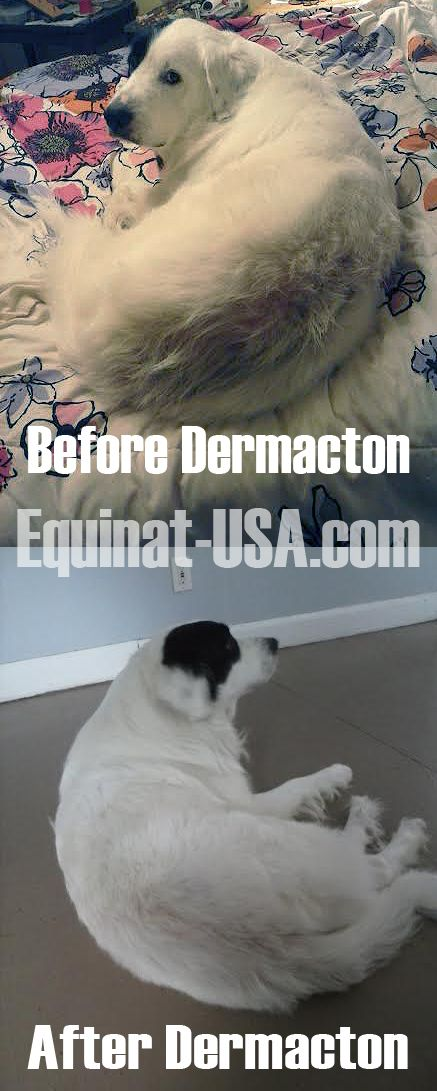 dermacton itchy dogs