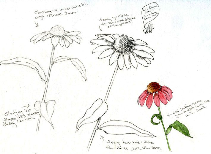 Craftsy Com Express Your Creativity Flower Drawing Learn To Draw Flowers Flower Anatomy