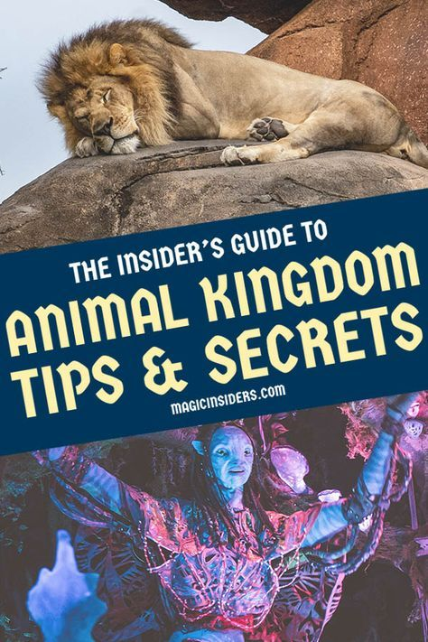 30 Animal Kingdom Tips & Secrets from Disney World Pros