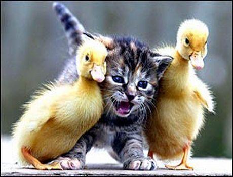 Fun with Ducks!